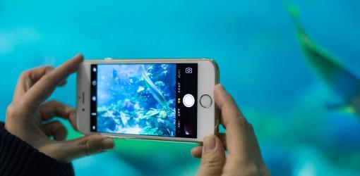 【iPhone写真術】映り込み防止テクでキレイに!水族館で水中写真を楽しもう