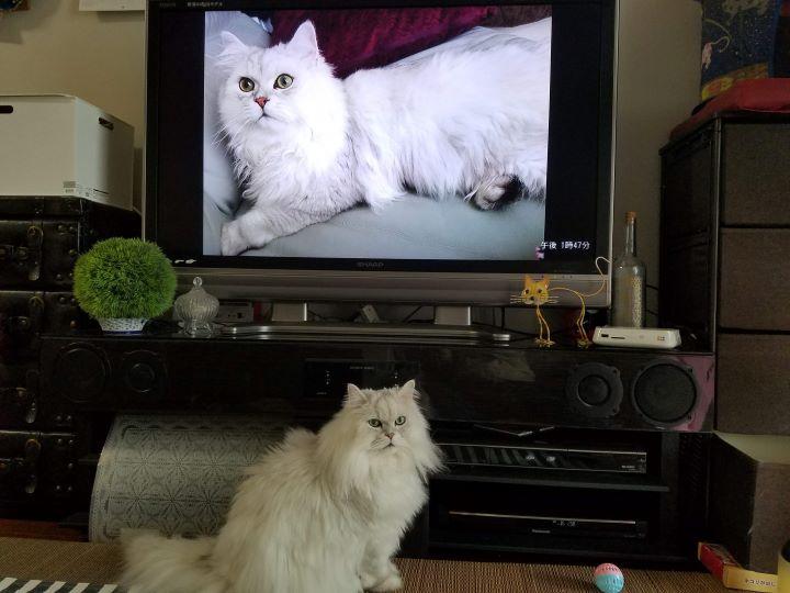 猫の愛くるしい日々をまるっと一緒に楽しめる、おすすめのペット写真整理術